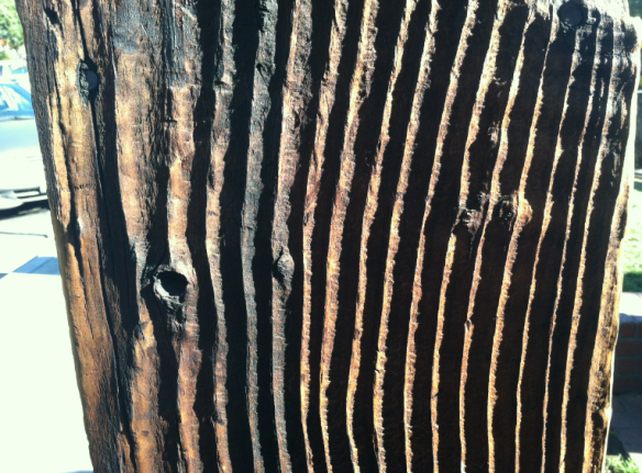 weathered wood showing sunken early growth rings